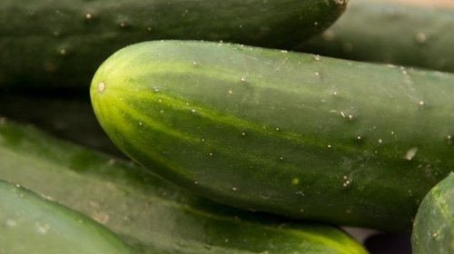 <p>Garden-fresh cucumbers add a welcome crunch to a fresh salad.</p>
