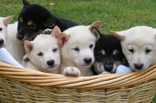 Top 10 Cutest Puppies