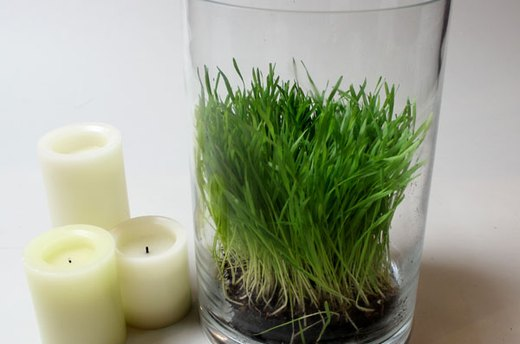 How to Make the Wheatgrass Hurricanes