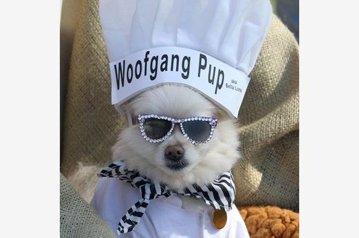 Top (Dog) Chef