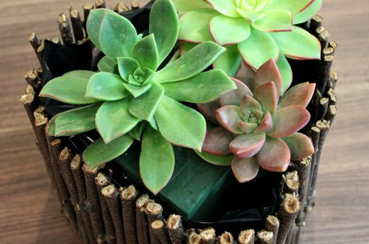 Arrange the Succulents