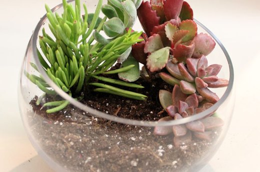 Place Succulents in the Soil