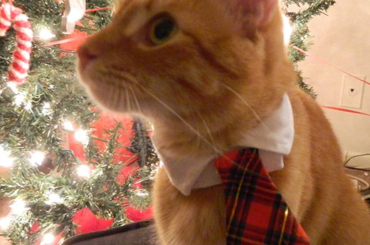 Holiday Cat Necktie