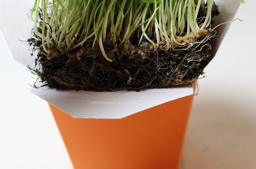 How to Make the Wheatgrass Skewer Display