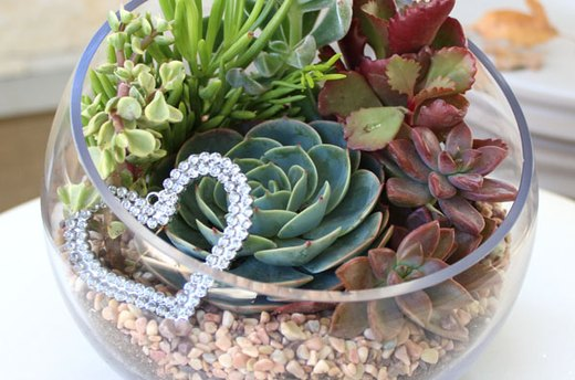 Create Your Own Stunning Succulent Terrarium