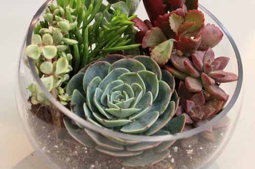 Make One Large Succulent a Focal Point