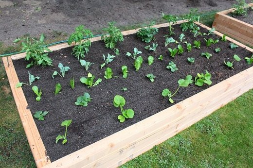 Take It to the Next Level With a Raised Vegetable Garden