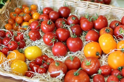 Choose the Right Tomatoes
