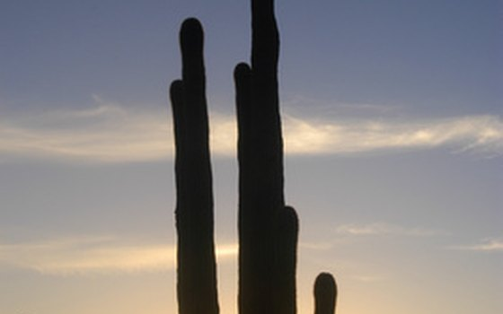 Saguaro National Park contains about 1.6 million saguaro cactuses.