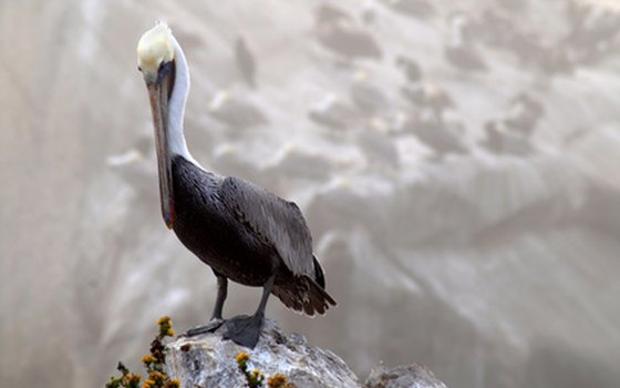 Bird watching is popular among the beaches near San Louis Obispo.