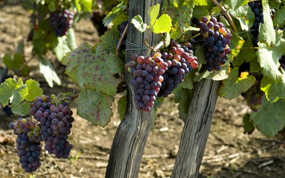 In the fall, locals celebrate the harvest season and the new wines.