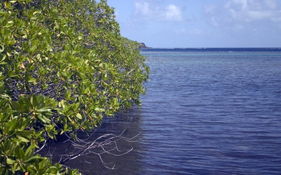 Mangrove trees line the waterways of the area.