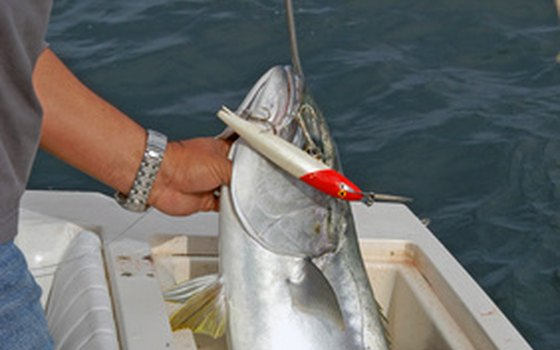 You can fish with lures, live bait or flies in the waters around Naples.