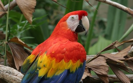 Scarlet macaws are one of Costa Rica's free attractions.