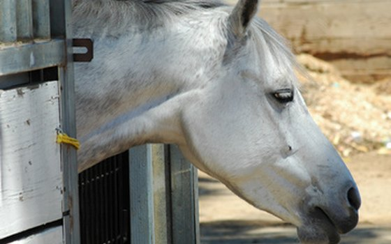 Look for a facility where your horse will be comfortable in the Arizona heat.