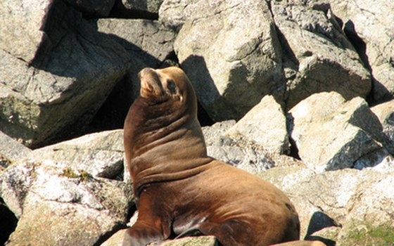 Spot sea lions, seals, porpoises, eagles and orcas from Vancouver Island.