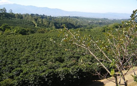 Tour the coffee plantations in Costa Rica.