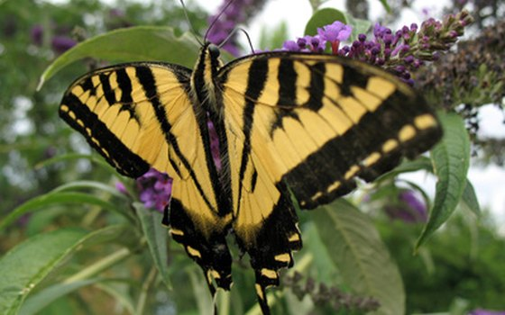 Visit the permanent butterfly exhibit in Houston.