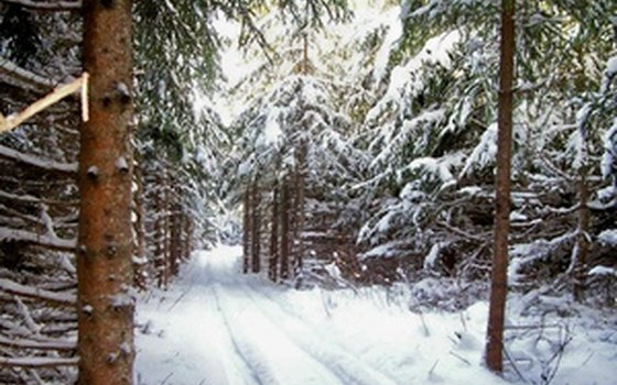 Winter snowmobile trail