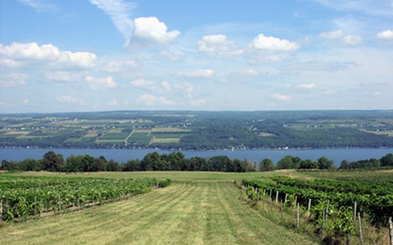 The Finger Lakes is a popular wine-making region in NY.