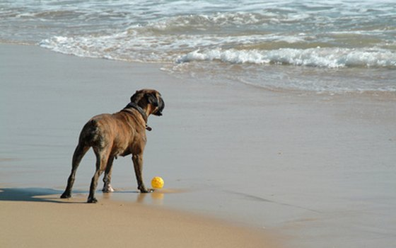 At the dedicated dog beach at Woodmere Park, Fido can play in the surf all day long.