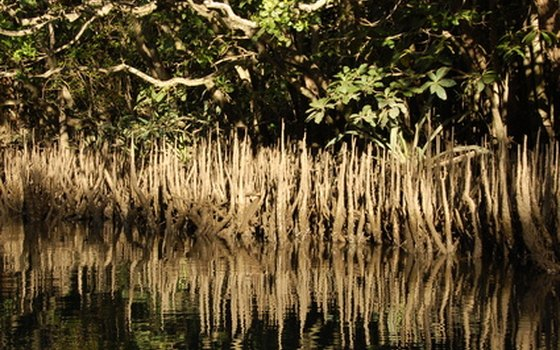 Mangroves and sea grasses fill the 10,000 Islands National Wildlife Refuge.