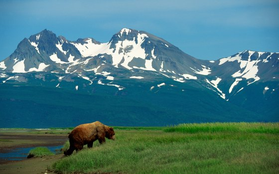 Keep your distance as you spend time with Alaska's native inhabitants.