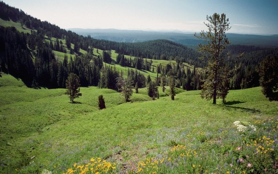 Large national parks like Yellowstone have enormous backcountry acreage.