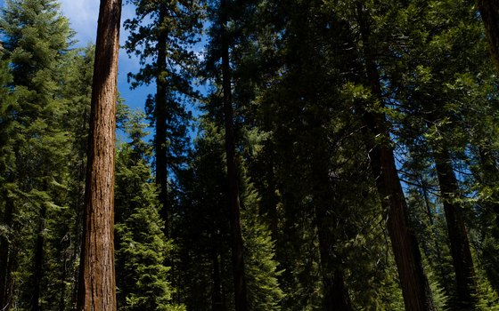 Hike among giant Sequoias.