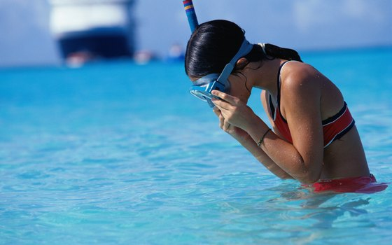 Florida offers snorkeling opportunities for both children and adults.