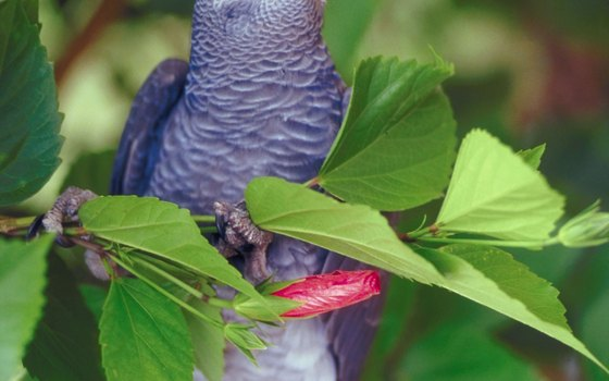 Tropical birds galore reside in Pigeon Forge's Parrot Mountain and Gardens.