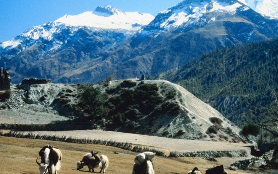 Trekkers pass through local farms in the Himalayas.