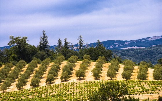 Sonoma Valley vineyards celebrate each fall with Sonoma County Wine Country Weekend events.
