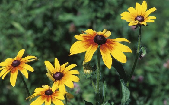 Learn to identify area wildflowers at Midland's Chippewa Nature Center.