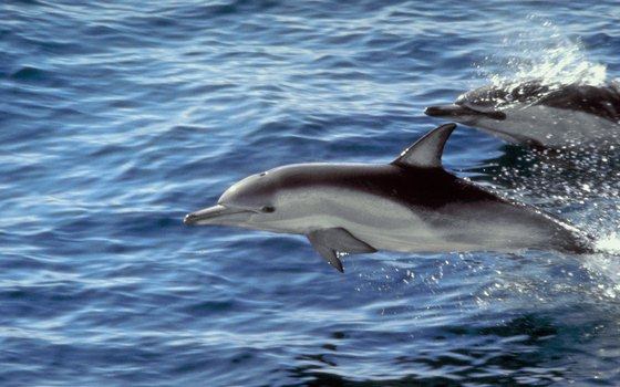 Federal law prohibits feeding dolphins and other marine mammals.