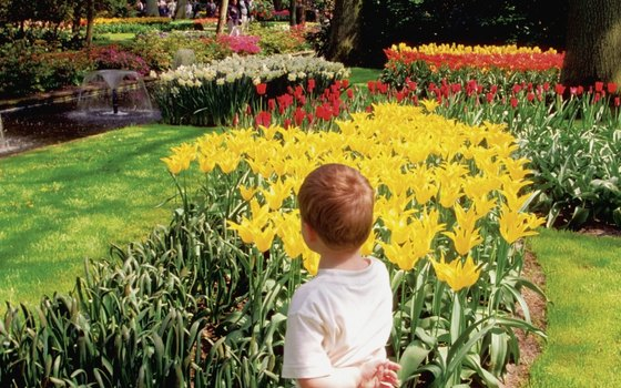 The Keukenhof Gardens is open annually from late March to late May.
