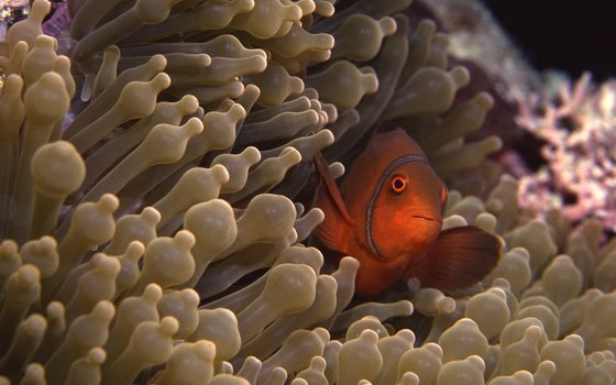 A stop at the Great Barrier Reef off Australia's coast provides rare diving opportunities.