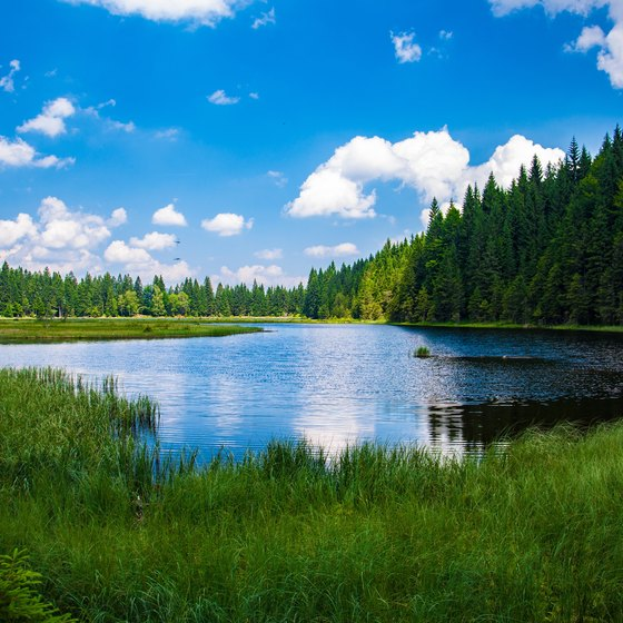 A clear, beautiful lake with grass and trees.