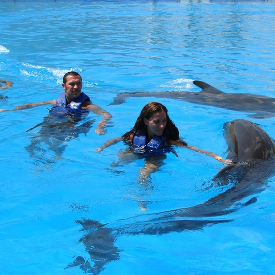 Swim With Dolphins in Alabama