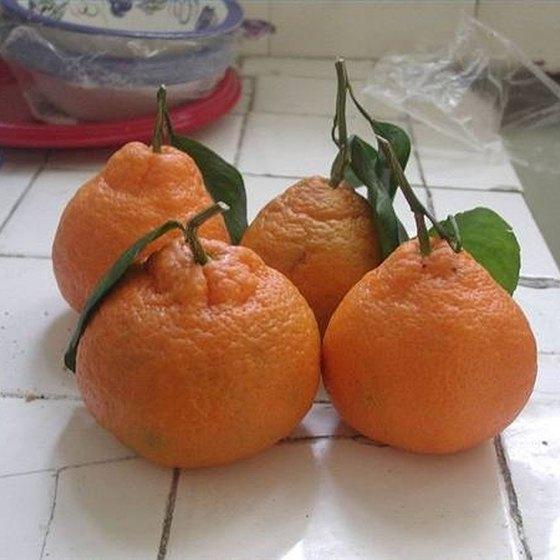 Store Mandarins