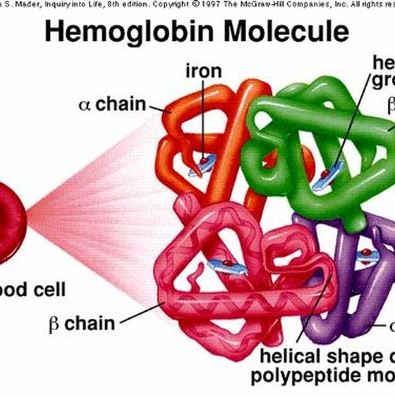 Hemoglobin: a chain of four protein molecules.