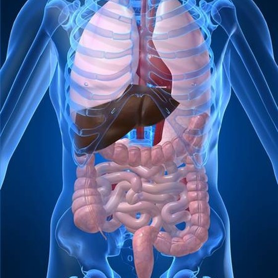 What Are the Symptoms of Stage Four Liver Cancer?