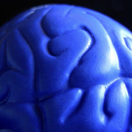 The brain has four main parts: cerebrum, cerebellum, diencephalon and brainstem.