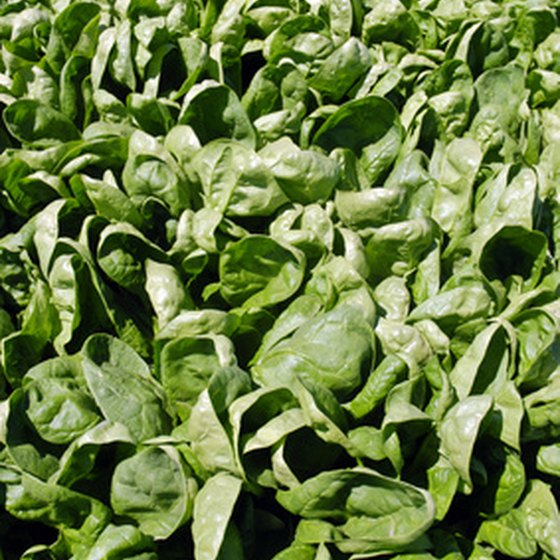 While high in iron, the oxalates in spinach inhibit absorption.