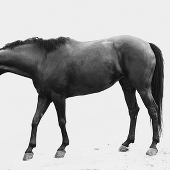 Horse serum has been used to manufacture numerous important antitoxins.