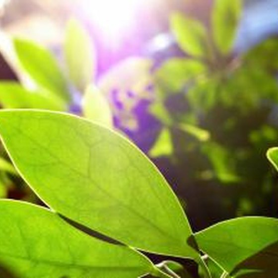 Plants in sunlight.