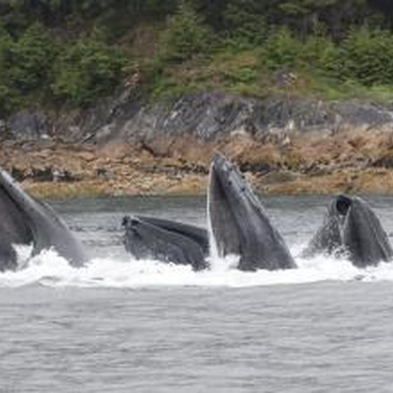 The Best Time for Whale Watching in Maine