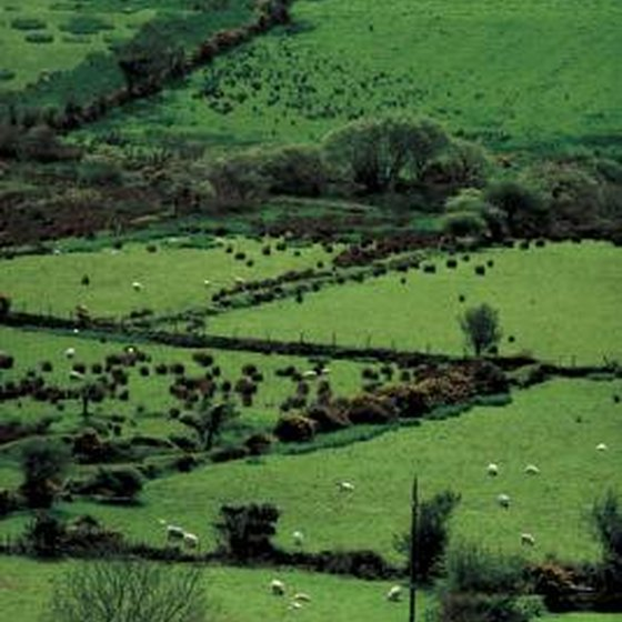 the legendary greenery of Ireland