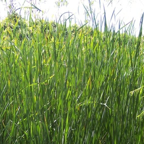 Stay covered when walking in tall grasses to avoid tick bites.