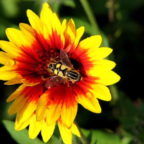 Honey bees are vital parts of our ecosystem, but can sometimes be pests